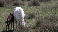 Horses animal wild carmargue Stock Footage