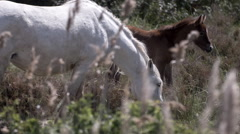 horses animal wild carmargue - stock footage