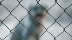 Dog Behind cage Stock Footage