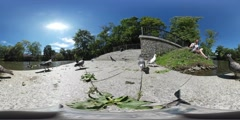 360Vr Video Man is Feeding a Pigeons Lake Embankment Birds Are Walking Around Stock Footage