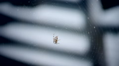 Spider in the wind Stock Footage