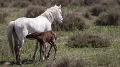 Horses nature wilflife reserve carmargue lagoon Stock Footage