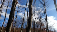 Autumn Blue sky 2 Clouds Time lapse Forest Stock Footage