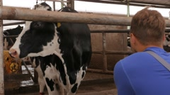 Young farmer checking cows in the cowshed in dairy farm in 4k UHD video. - stock footage