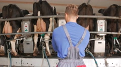 Cow milking facility and mechanized milking equipment in 4k UHD video. - stock footage