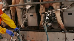 Cow milking facility and mechanized milking equipment in 4k UHD video. Stock Footage
