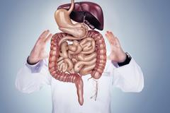 Doctor with stethoscope and digestive system on the hands . High resolution. Stock Photos