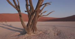 4K moving shot of dead trees in Dead vlei inside the Namib-Naukluft National Stock Footage