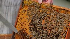 Beekeeper opening honeycombs. Stock Footage