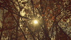 The sun in the sky shining through the autumn orange  foliage on a tree branch - stock footage