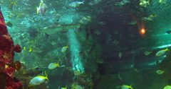 Tropical fishes and shark - stock footage
