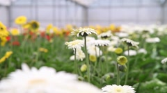 Production greenhouse plantation of variety of flowers, slider shot Stock Footage
