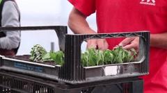 worker preparing flower seedlings in trays for greenhouse, slider shot - stock footage