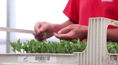 Worker preparing flower seedlings in trays for greenhouse, slider shot Stock Footage