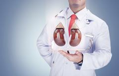 Doctor holding human organs on the tablet on grey background . High resolutio Stock Photos