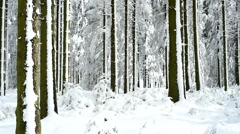 Pine tree trunks in coniferous forest covered in snow in winter Stock Footage