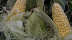 Corn on cobs husks produce Stock Footage