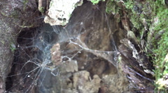 Funnel spider web nest Stock Footage