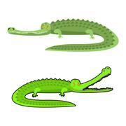 Crocodile isolated. Good caiman. Wild animal. Green reptile with big teeth. A - stock illustration