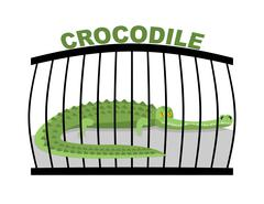 Crocodile in zoo. Large alligator in cage. Green aggressive predator in capti Stock Illustration
