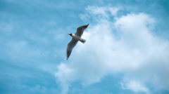 Seagull flying against the blue sky with clouds. Slow mo, slo mo Stock Footage