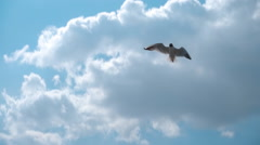 Seagull flying against the blue sky with clouds. Slow mo, slo mo - stock footage