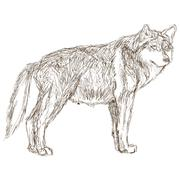 wolf sideview sketch icon - stock illustration