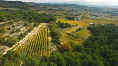 Aerial of beautiful autumn vineyards Stock Footage