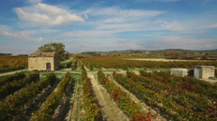 Aerial of beautiful vineyards in autumn colors Stock Footage