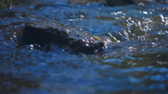 Blue water in the river smoothly bends around a rock and sparkles in the sun Stock Footage