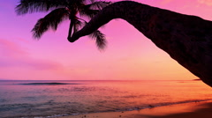 4K Sunset on Tropical Beach, Pink Sunset and Palm Silhouette on Ocean Stock Footage