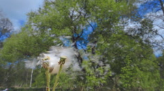 Blow to the dandelion seeds and scatter around. Slow mo, slo mo Stock Footage