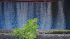 Green bush growing from the dam base. Slow mo, slo mo Stock Footage