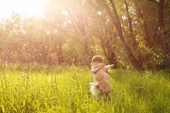 Little Girl and Spitz - stock photo