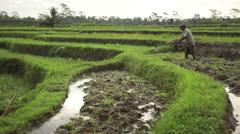 Balinese farmer ploughing a wet terraced rice field near Ubud Bali Stock Footage