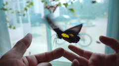Beautiful butterfly takes off from the hands. Slow mo, slo mo Stock Footage