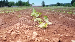 Planting on Agriculture field. Stock Footage