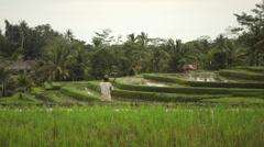 Balinese farmer ploughing the wet rice terrace field near Ubud Bali Stock Footage