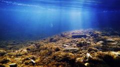 Underwater creek brown didymo mats Stock Footage