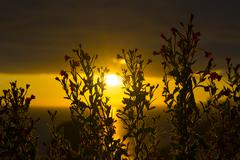 Wild atlantic way sunset through wild flowers Stock Photos