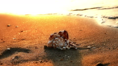 Shell on beach Stock Footage