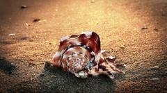Shell on beach - stock footage