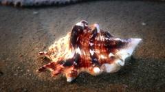 Shell on beach Stock Footage