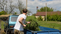 Farm village man guy unloads mowed green grass hay with fork from the body - stock footage