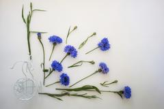 Blue cornflowers and white bike. Overhead view. Flat lay, top . Place for your Stock Photos