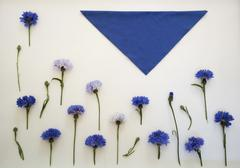 Blue cornflowers. Overhead view. Flat lay, top . Place for your text Stock Photos