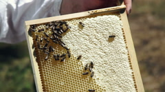 Beekeeping. Working bees on the honeycomb with sweet honey. Honey is bee keeping Stock Footage