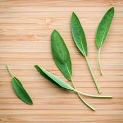 Closeup fresh sage leaves  on wooden background. Alternative medicine fresh s Stock Photos