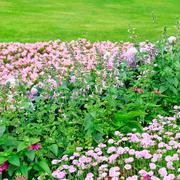 Beautiful flowerbed in summer park Stock Photos