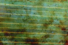 Detail of wooden horizontal batten cover on house, painting Stock Illustration